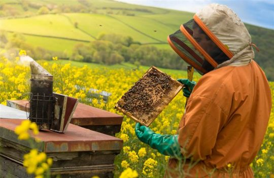 Farming Honey